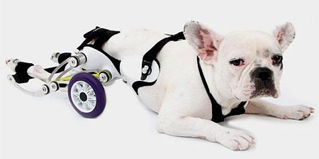ویلچر سگ