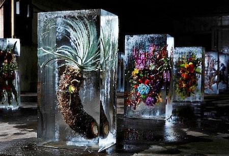 گل یخ زده