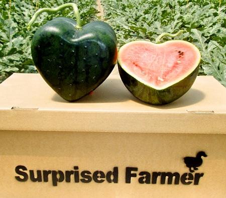 هندوانه هدیه ولنتاین