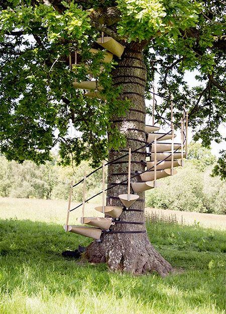راه پله درخت