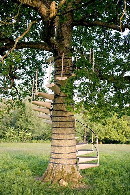 راه پله خانه درختی