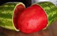 تا به حال هندوانه را پوست کردید؟